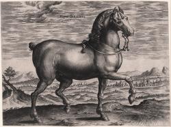 Equus Germanus